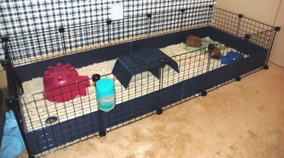 Indoor guinea pig cages for Cheap c c cages