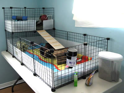 guinea pigs on pinterest guinea pig cages c c cage and