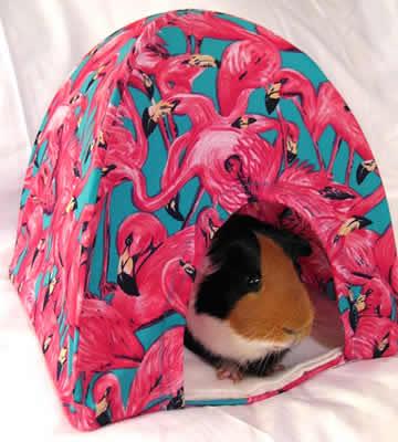 A guinea pig in a tent